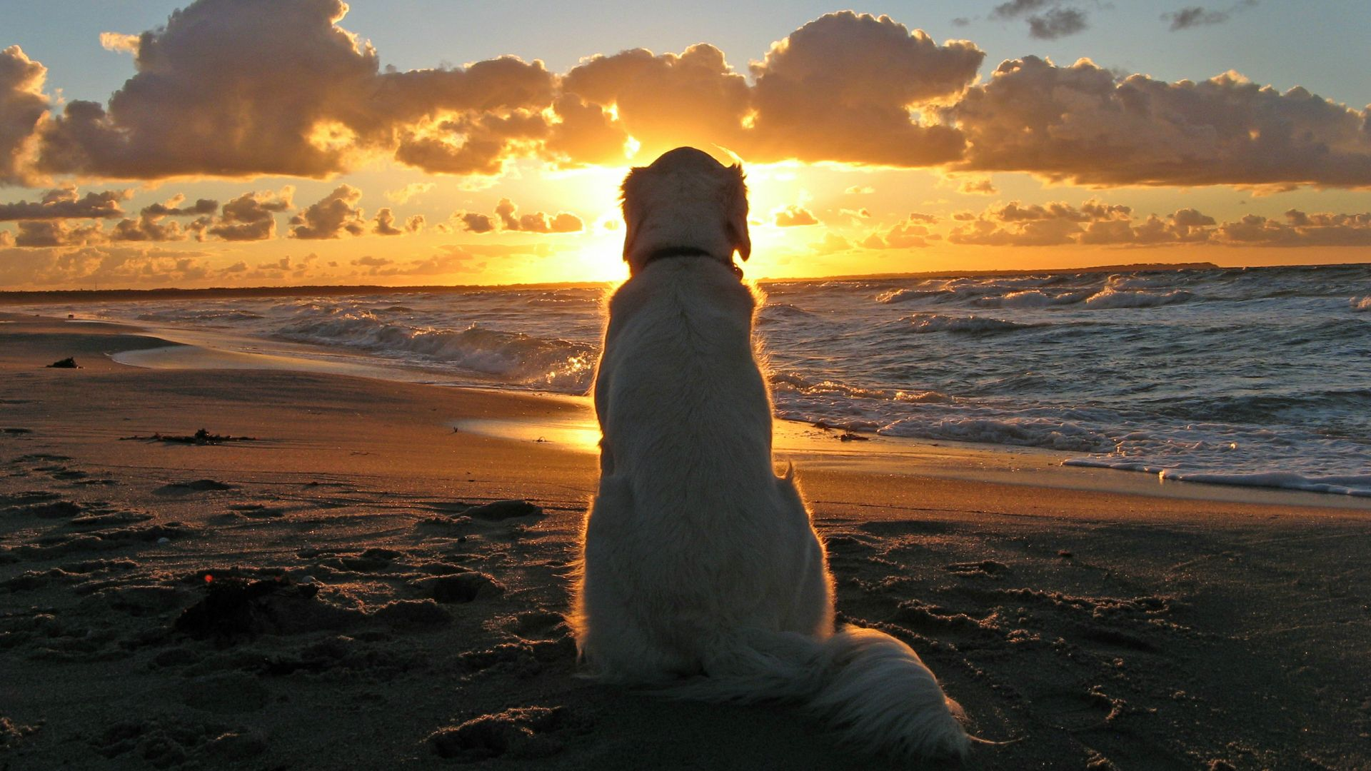 dog-sunset-wallpaper | UberFacts