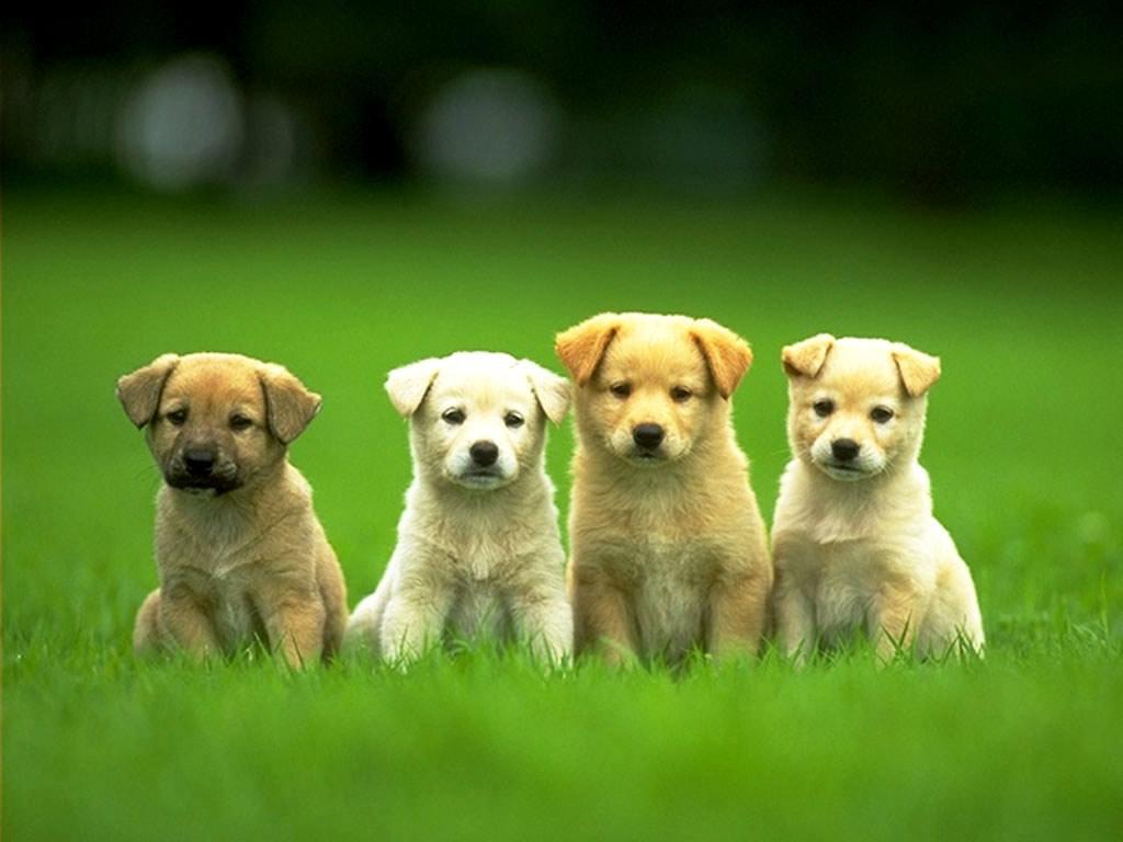 Puppies, uber, uber puppies